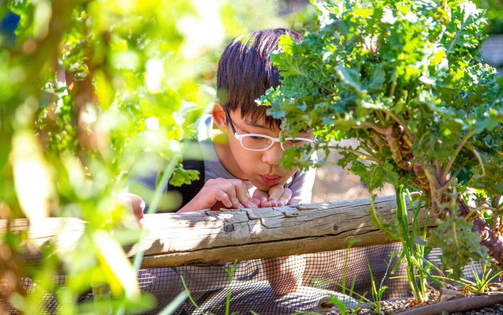 Boy looking up close at something in the garden at Irvine Ranch