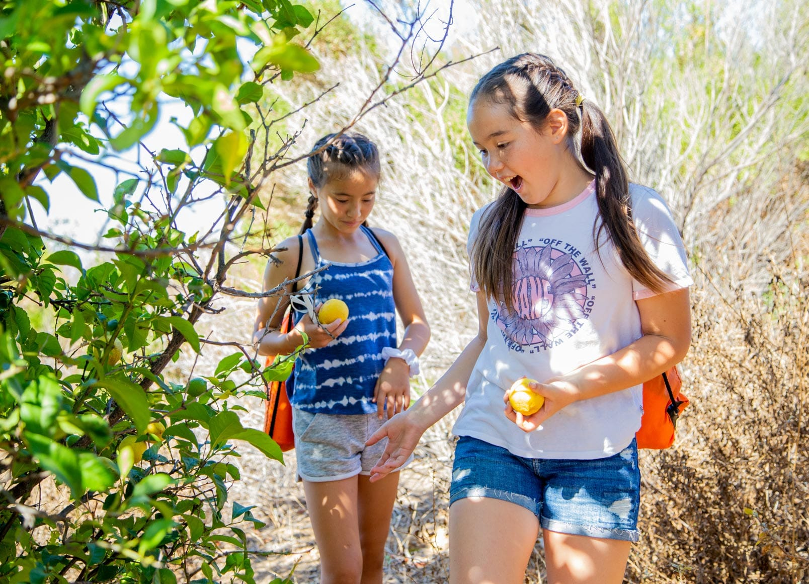 Two girls exploring and picking fruit in the citrus grove