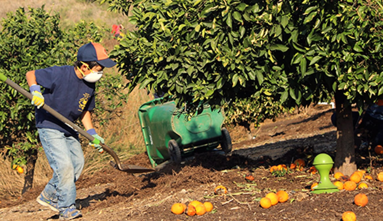 Boy shoveling oranges from an orchard at Irvine Ranch's Day of Service