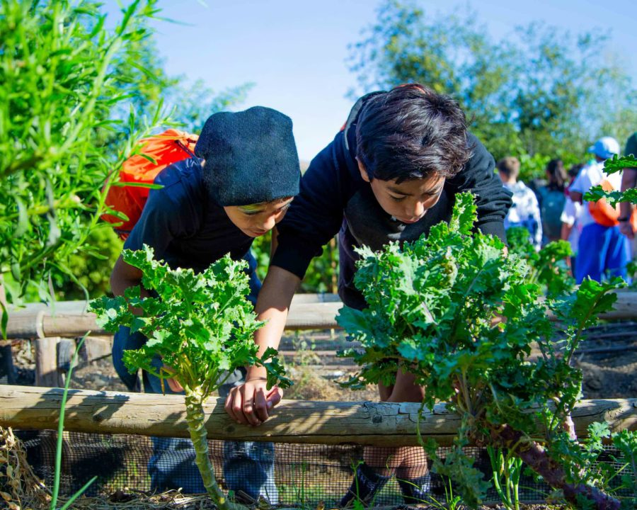 Two campers leaning over to look at vegetables in the Food Forest